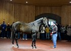 WinStar Awards Stallion Seasons to Breeders