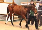 Marks Set as Tattersalls Foal Sale Concludes