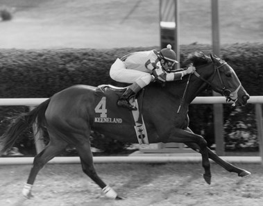 John Velazquez Slideshow Bloodhorse