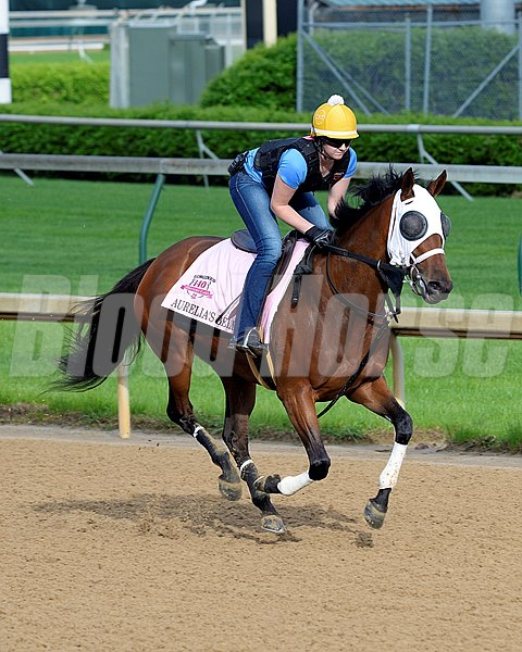 Caption: Aurelia's Belle