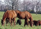 Major Equine Survey Planned for Kentucky