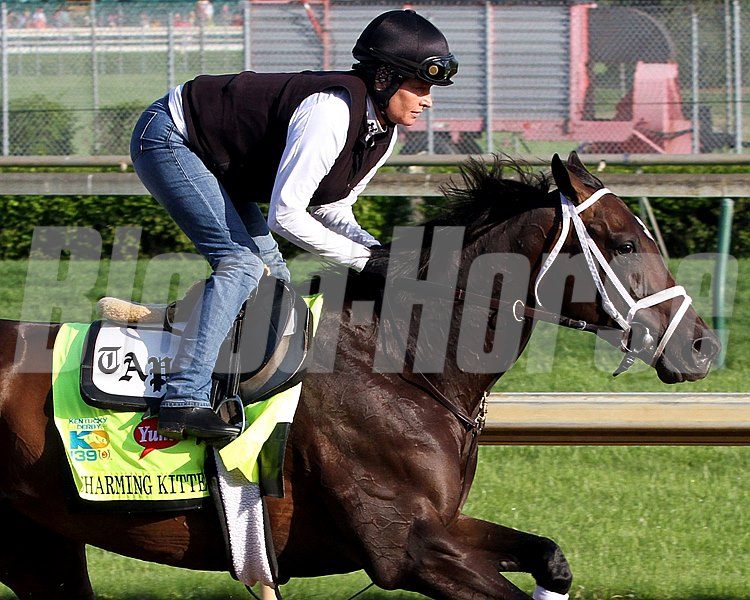 Charming Kitten on the track at Churchill Downs May 1, 2013.