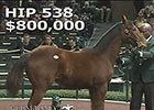 Keeneland January: Hip 538 in the Ring