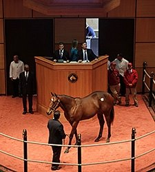 Harlan's Holiday Colt Brings $250,000 at F-T