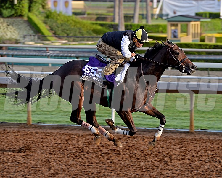 Little Alexis on Oct. 26, 2014, at Santa Anita in preparation for the Breeders' Cup.
