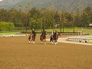 Training Begins on New Santa Anita Surface