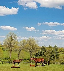 AHC Seeks Industry Input on Equine Study