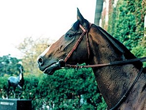 French Classic Winner, Sire Hernando Dies