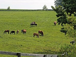 Federal Shutdown Could Impact Horse Industry
