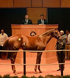 Speightstown Colt Brings $235,000 at F-T