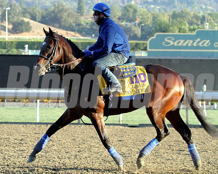Paynter on the track at Santa Anita Park on October 31, 2013. Photo By: Chad B. Harmon