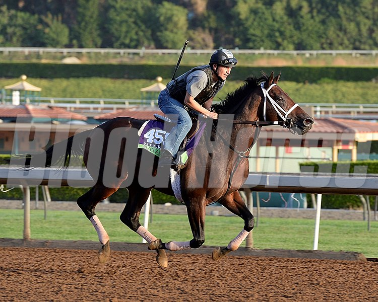 Caption:  Sayaad