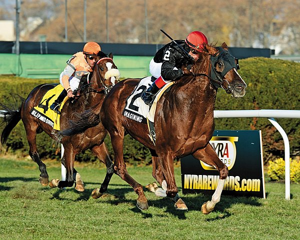 Imagining became a graded stakes winner for the first time when he used a clean stalking trip to capture the $250,000 Grade III Red Smith Handicap on the grass by half a length at Aqueduct Racecourse.