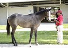 Fasig-Tipton 2013 July Sale Preview