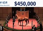 Fasig-Tipton Winter Mixed Sale: Wrap