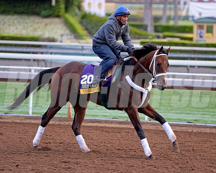 Unbridled Forever for Dallas Stewart on Oct. 26, 2014, at Santa Anita in preparation for the Breeders' Cup.