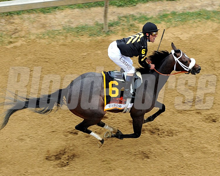 Gary Stevens celebrates winning the 138th Running of the Preakness Stakes at Pimlico on May 18, 2013.