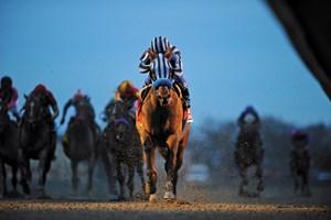 Undefeated Princess Arabella Retired Bloodhorse