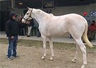 Fasig-Tipton February: Rare White Filly Stands Out