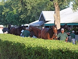 Sept. Sale: Pendulum Swings Back to New Sires