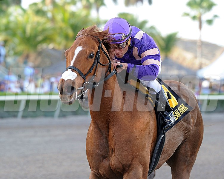 Heart Stealer and Joel Rosario take the Inside Information Stakes at Gulfstream Park.
