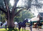 Optimism High for Keeneland September Sale
