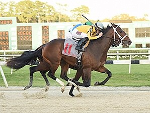 Nygaards on Right Path With Ocean Knight