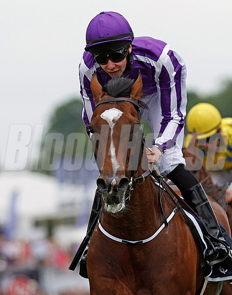 A son of Montjeu, St Nicholas Abbey was trained by Aidan O'Brien for the Coolmore connections of Michael Tabor, Mrs. John Magnier, and Derrick Smith.