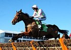 Faugheen Stays Undefeated With Cheltenham Win