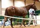Awesome Again Yearling Tops Louisiana Sale