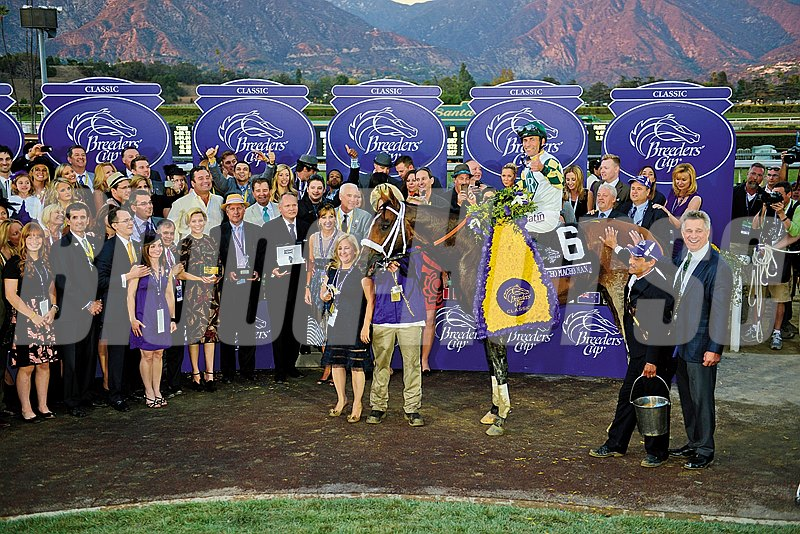 Mucho Macho Man in the winner's circle following his win in the Breeders' Cup Classic (gr. I) November 2, 2013.