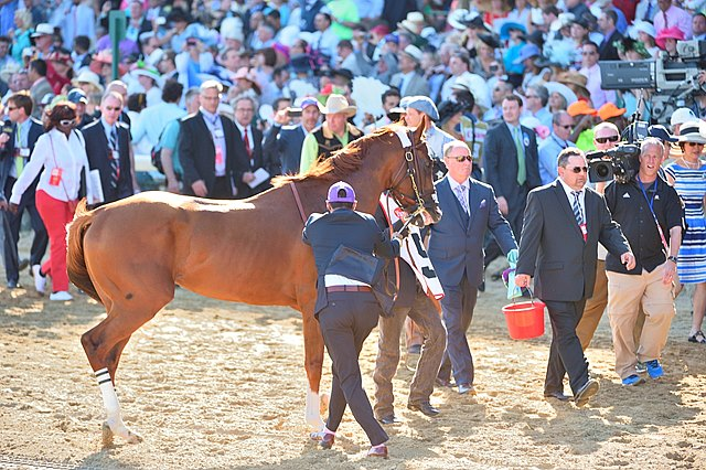 California Chrome walks over to the Paddock prior to the 2014 Kentucky Derby (gr. I).