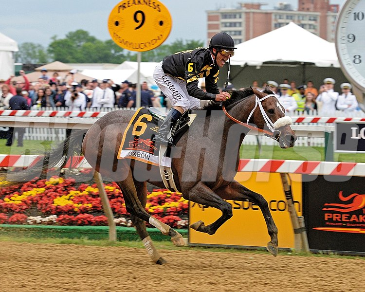 Caption:     Oxbow with Gary Stevens wins the Preakness (gr. I)
