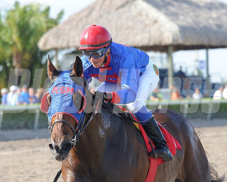 Social Inclusion wins the 8th Race at Gulfstream Park this weekend.