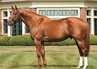 One-Fifth Curlin Share Surpasses $6 Million