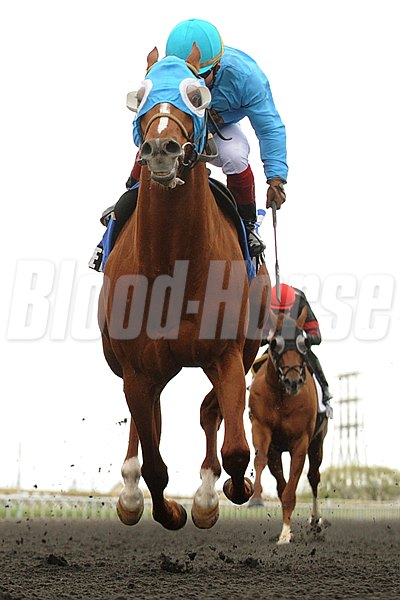 Jockey Justin Stein guides Alpha Bettor to victory in the $200,000 dollar Eclipse Stakes at Woodbine Racetrack on May 12, 2013.