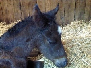 Court Vision had his first reported foal arrive when a filly was born on Jan. 20, 2013, at Hill 'n' Dale Farm in Aurora, Ontario. Bred by Knob Hill Stable, the dark bay or brown filly is out of the stakes-producing mare Panteccaria, by San Romano.
