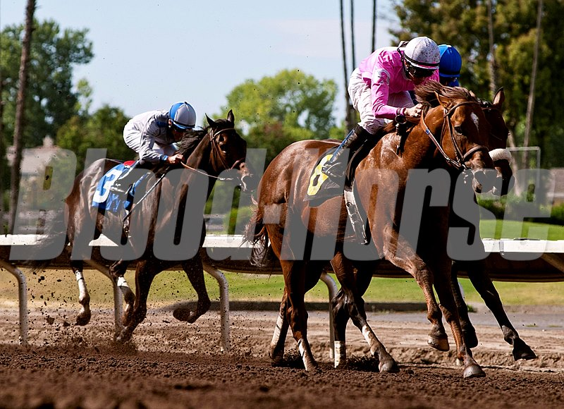 Longview Drive with jockey William Antongeorgi III up win the Oak Tree Handicap at Oak Tree at Pleasanton in California.