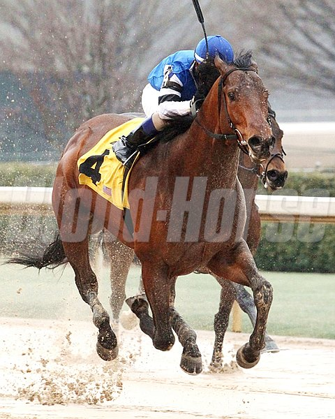THE BIG BEAST