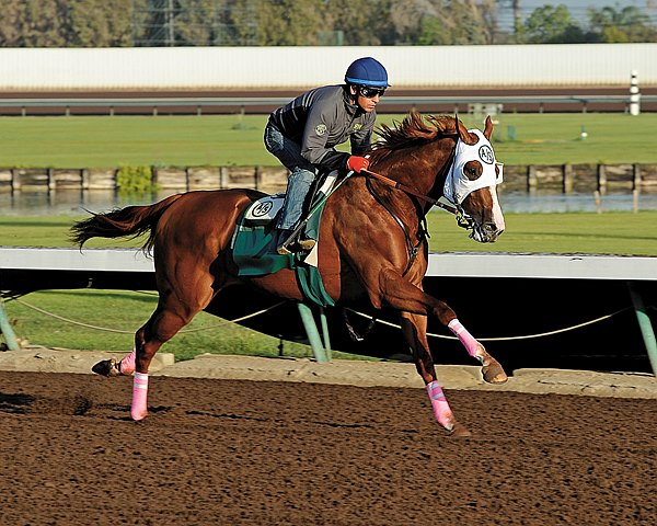 California Chrome and jockey Victor Espinoza works at Los Alamitos Racetrack in preparation for the 2014 Breeders' Cup Classic.