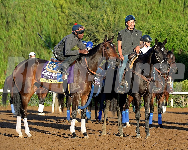 Caption:  Iotapa