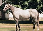 Smoke Glacken Euthanized at Age 22