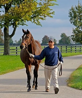 La Ville Rouge, carrying a Dynaformer filly at Mill Ridge Farm near Lexington, Ky.