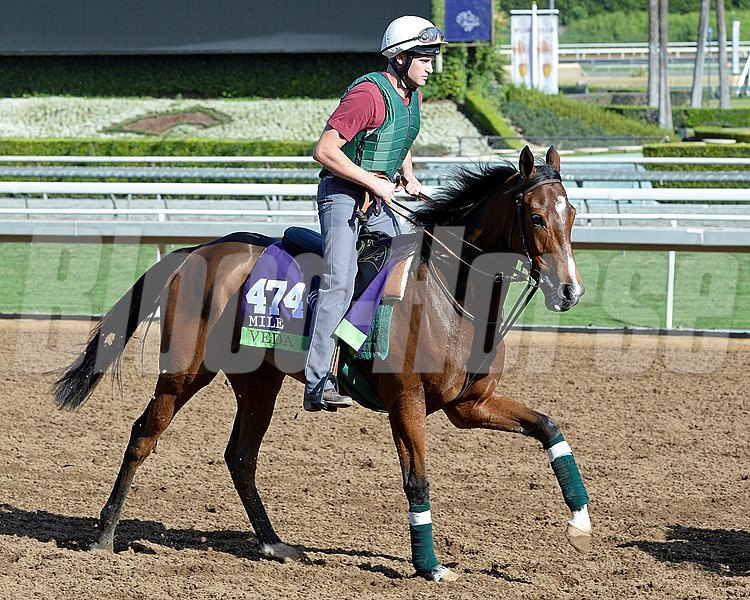 Caption:  Vida