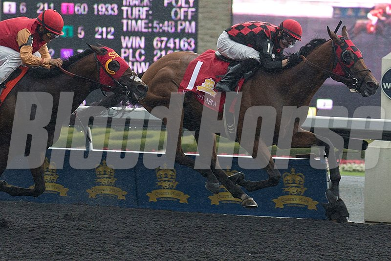 Toronto Ont.July7,2013.Woodbine Racetrack.Jockey Jesse Campbell guides Midnight Aria to victory in the $1,000,000 dollar Queen's Plate Stakes at Woodbine.Midnight Aria is owned by Tucci Stables and trained by Nick Gonzalez. michael burns photo