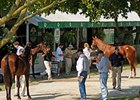 Keeneland Sale Numbers Still Well Above 2012