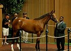Malibu Moon Filly Brings $1.35M at Keeneland