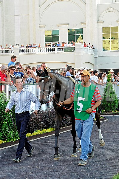 Royal Delta in the paddock before the 2013 Fleur de Lis