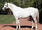 Sire Tapit Closing in on Record Season