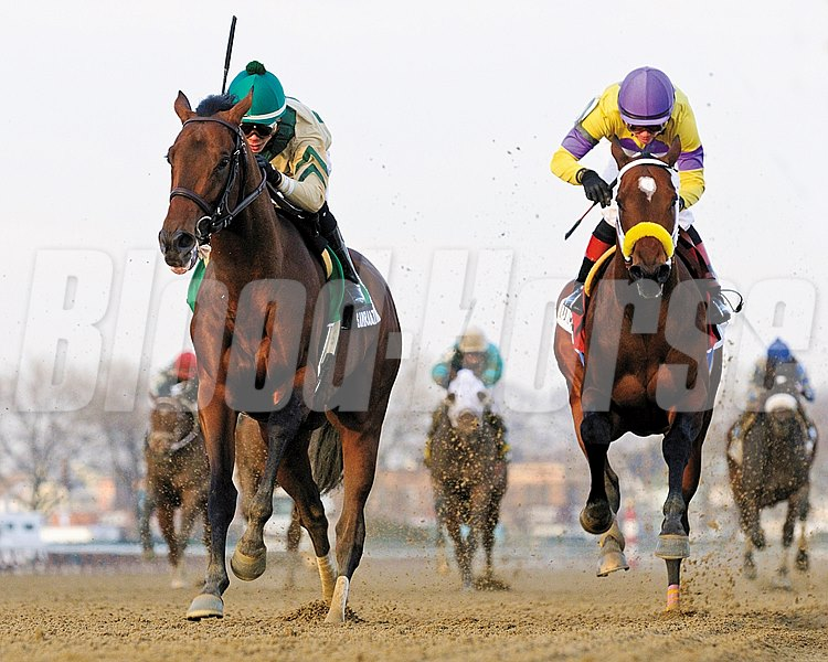 Samraat captures the $250,000 Grade III Withers Stakes at Aqueduct Racetrack.